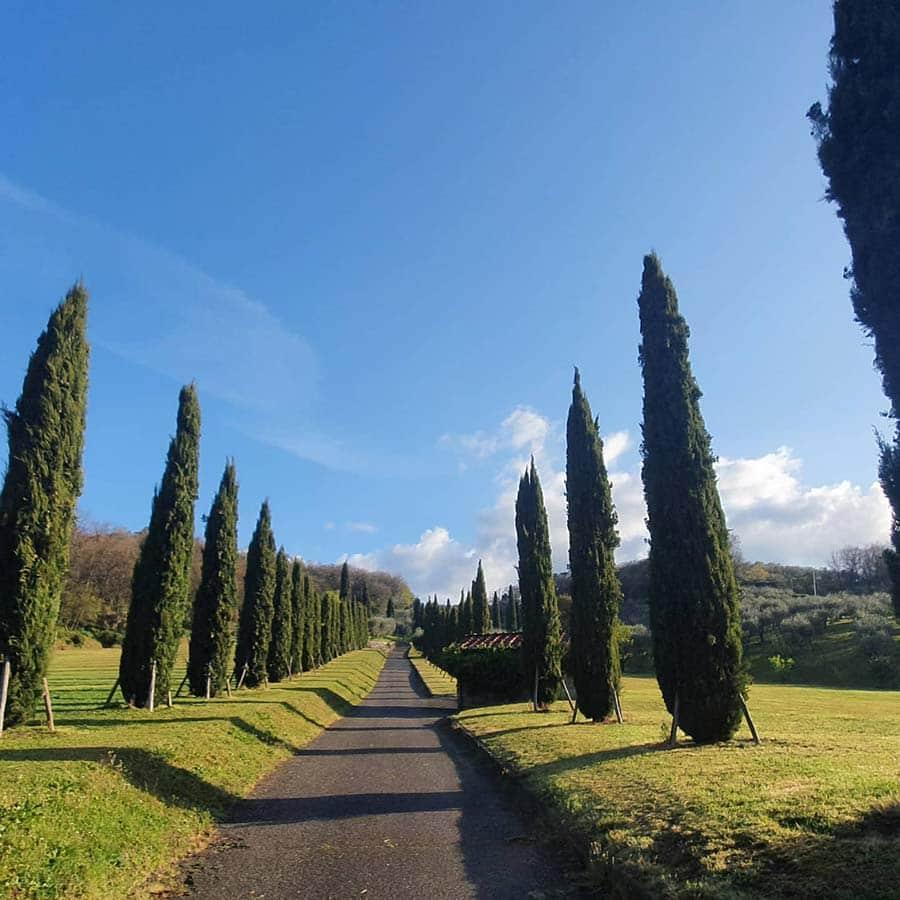 Tuscany cyprus trees 2021