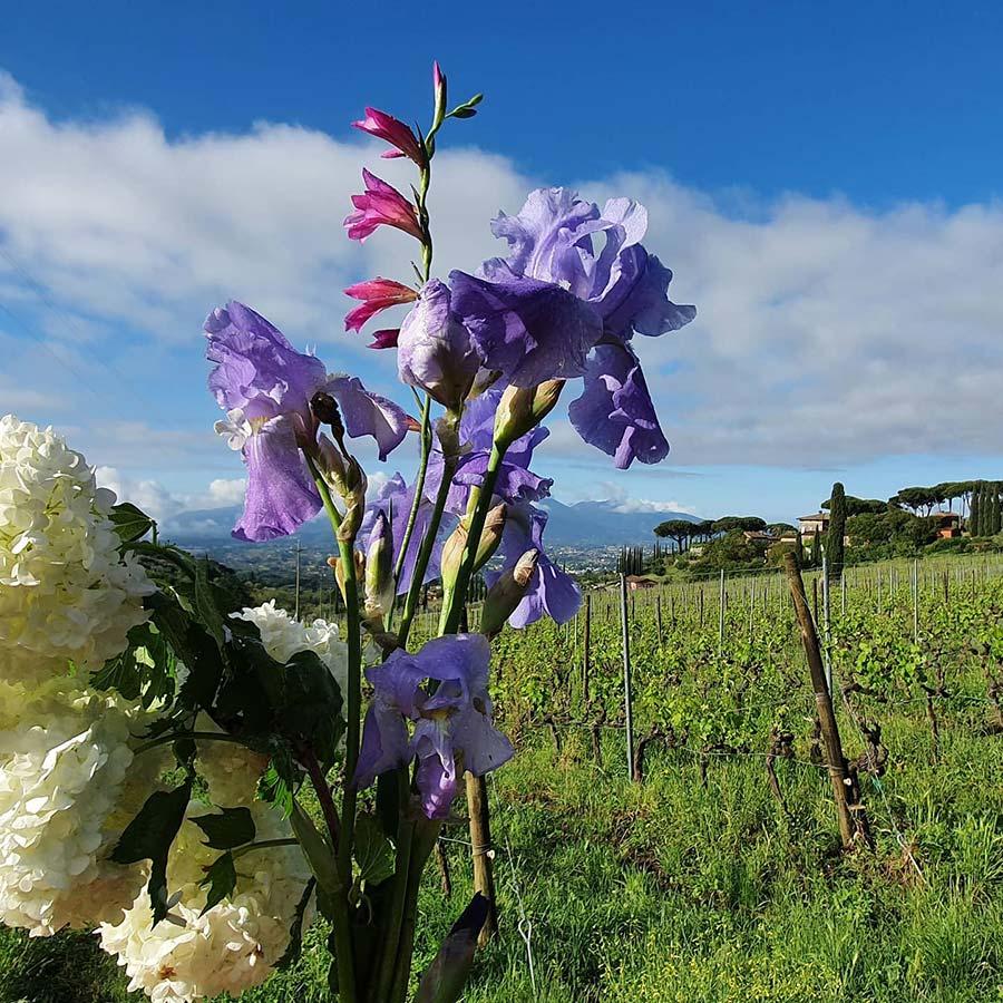 Flowers Tuscany