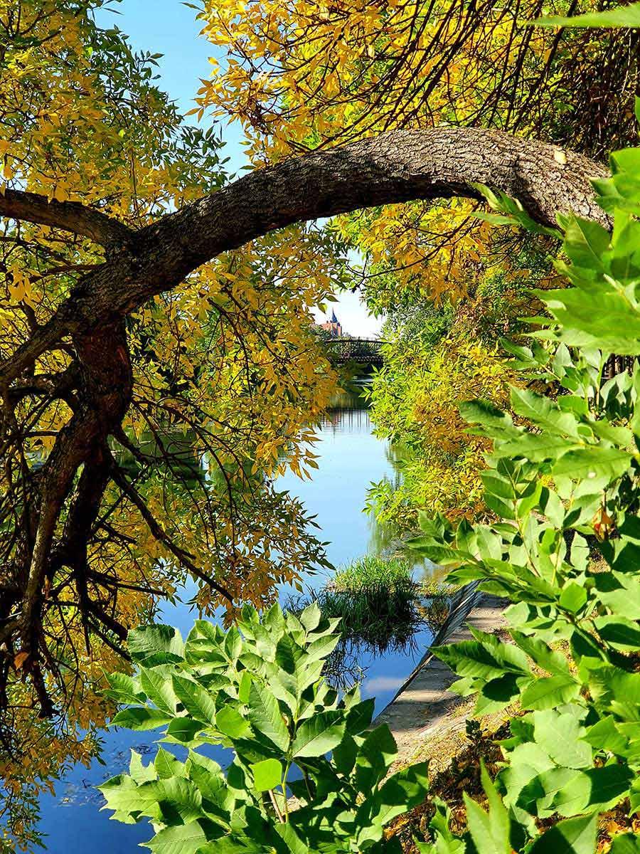 Autumn walks for mental health