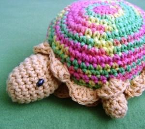 turtle-025