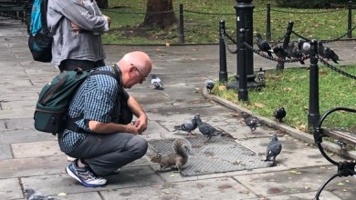 Photo of What a Squirrel in City Hall Park Teaches Us about Learning