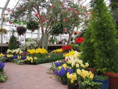 Spring Bulb Show la Hidden Lake Gardens