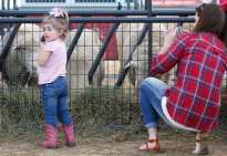 Leah Sirmans, 2, from Ocilla, Georgia, checks out the sheep as her mother, Stephanie Sirmans, 27, snaps a photo on her phone at the Georgia National Fair in Perry, Georgia, on Saturday, October 10, 2015. (Photo/Maggie Harney, mkharney@uga.edu)