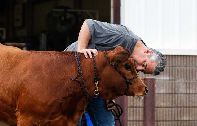 Hank Knight, 50, an engineering manager, pets his daughter's cow at the Georgia National Fair, in Perry, Georgia, on Saturday, October 7, 2017. The multiple livestock shows are a main attraction at the fair. (Photo/Kayla Renie)