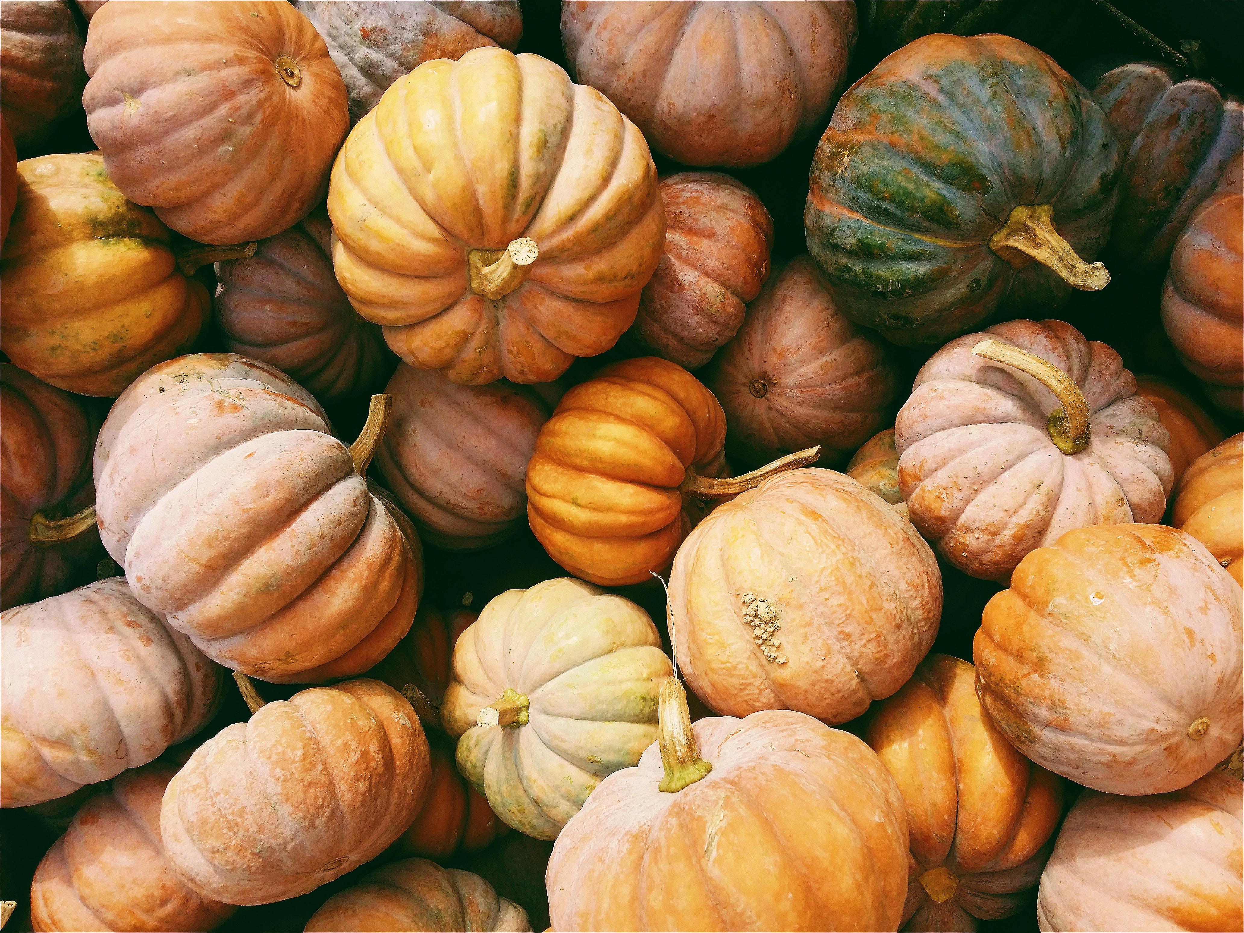 Saisonkalender – Oktober