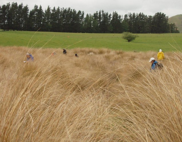 chest deep in red tussock