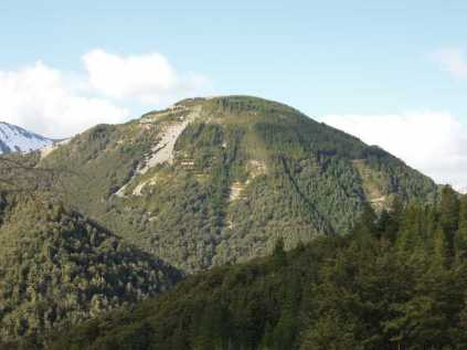 Helicopter Hill in 2006 a major launch site now cleared of pines. Lower slopes are mountain beech.