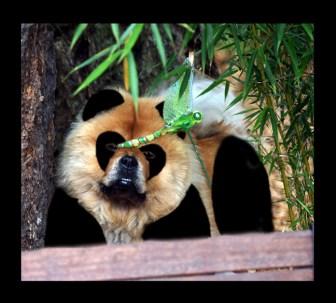 Lillian the Panda wannabe!