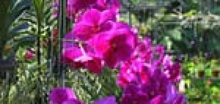 December 26-Orchid Farm and Sunday Walking Market