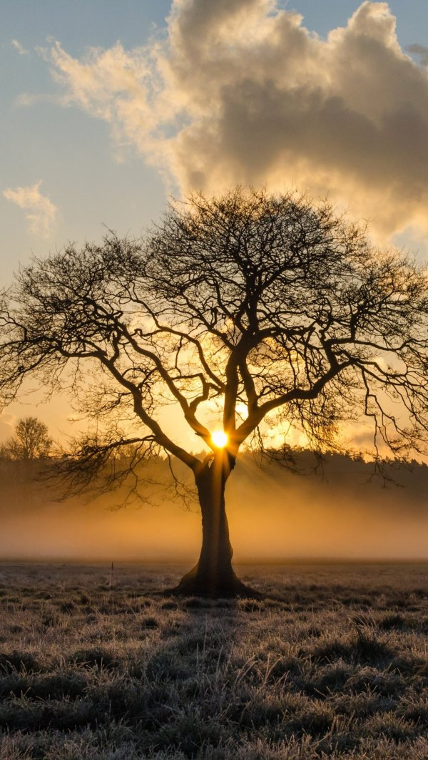 Sunrise in the Trees Wallpaper - iPhone, Android & Desktop ...