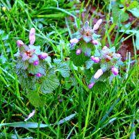 Fioletowy kwiatek kwiatki liście trawa
