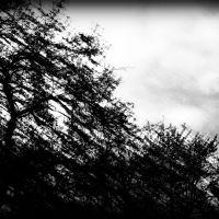 Mroczne drzewa konary niebo