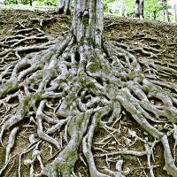 Korzenie drzewa