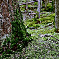 Las ściółka mech kora drzewa