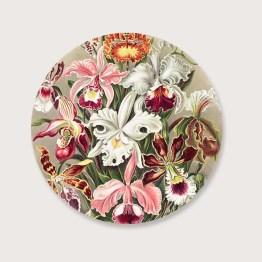 Muurcirkel orchideae
