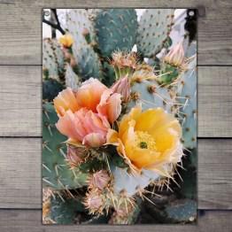 Tuinposter Cactus