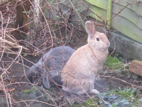 The Lessons I Learned From A Rabbit