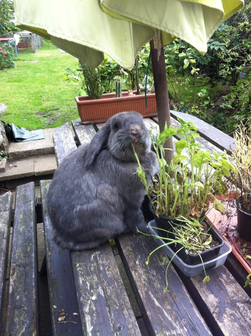 What A Rabbit Taught Me About Loss