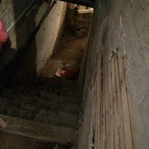 body-in-the-cellar