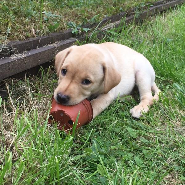 taking-responsibility-dog