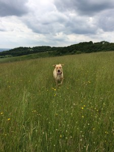 dog-running-through-field