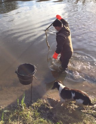 man standing in river holding up an eel - a springer spaniel stands next to him