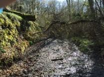 fallen tree across a muddy path