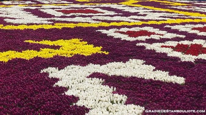 tapis de tulipes sur la place Sultanahmet à Istanbul au pied de la Sainte-Sophie. Plus grand tapis de tulipes au monde!