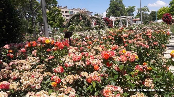 roseraies du parc fuar de Konya