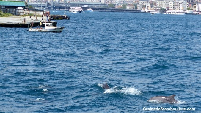 Les dauphins du Bosphore, Istanbul, Corne d'or, mer de Marmara