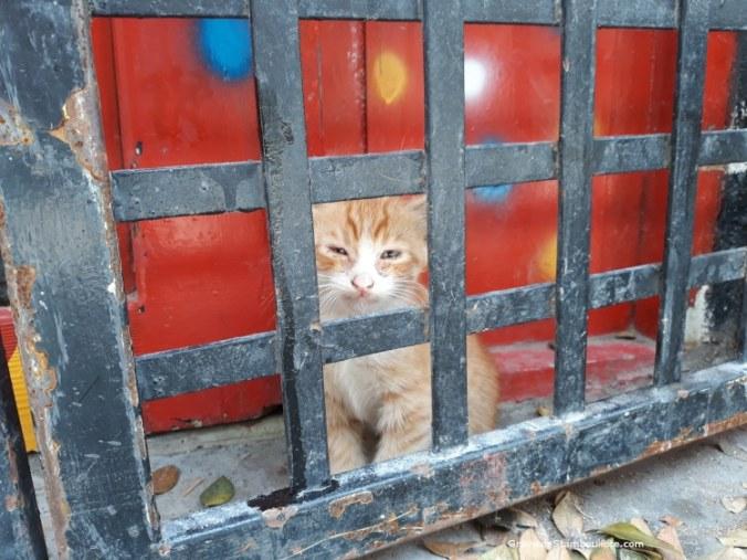 chaton istanbul derrière un grillage pendant confinement covid
