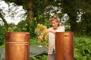 Cueillette et distillation de l'hélichryse