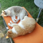 chats gardant les semences