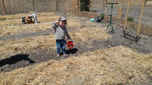 future génération de graines de oaï