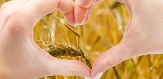 Barley18