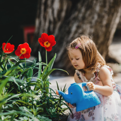 cara merawat taman depan rumah
