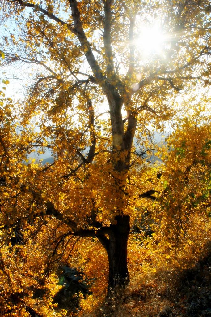AutumnWinterTree1024