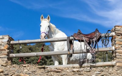 Find out about 4 fantastic outdoor activity holidays in Granada