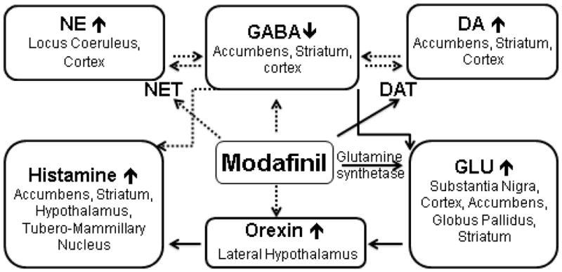 Modafinil - mechanizm działania - efekty i dawkowanie