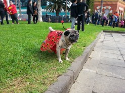 Dogs carnival at Las Palmas