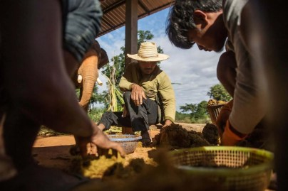 workers separating beans from elephant poo