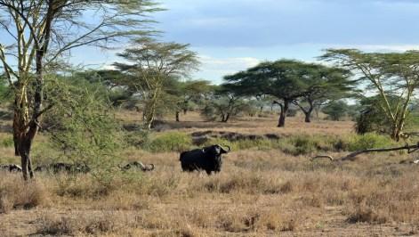 015 Tanzanie