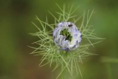 arachnides_araignees