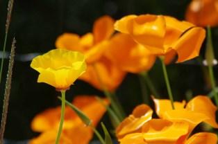 f-jardin_4