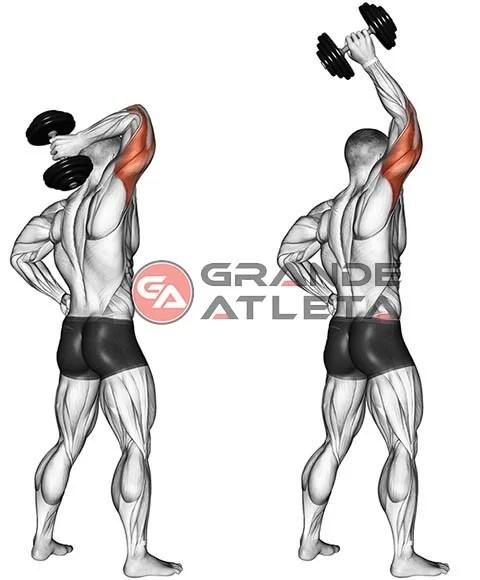 tríceps francês