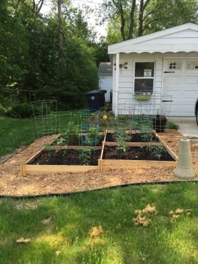Organic garden on side of yard, contains many herbs, tomatoes, petters, Tomatillos and 2 miniature blueberry bushes.