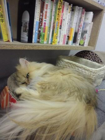 Le chat ne dort jamais sur ses deux oreilles.