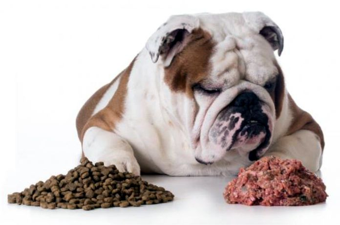 Comida para humanos vs. croquetas para perros - ¿Qué pasa si solo le das a tu perro comida para humanos?