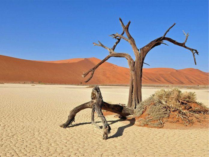 Deadvlei - 29 de los paisajes más surrealistas de nuestro hermoso planeta