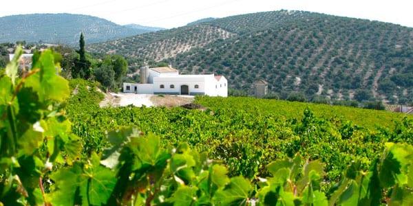 Ruta del Vino Montilla Moriles